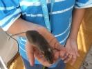 Az Állatok világnapján a gyerekek bemutathatták kedvenc állataikat - 2008